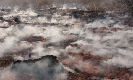 пожар на болоте - фото
