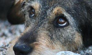 Бездомная собака - фото