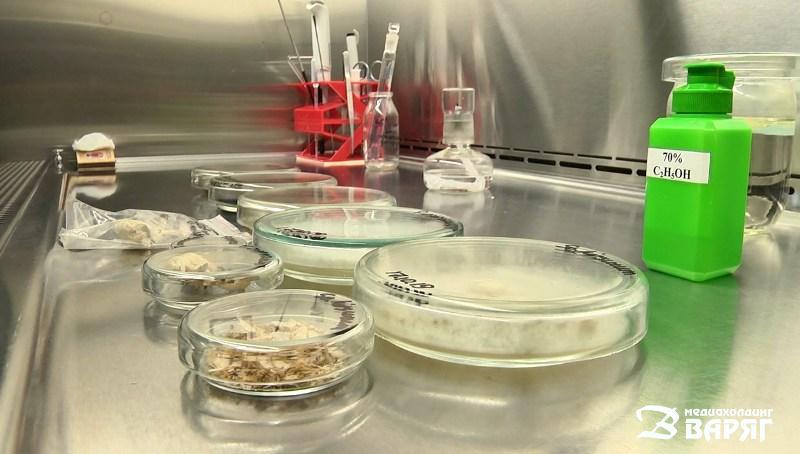 Биотехнология - фото