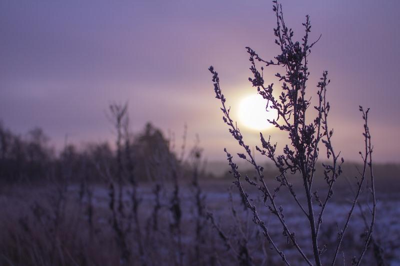 Солнце - фото