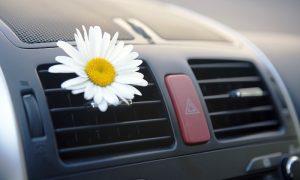 Чистота и свежесть в автомобиле: фото
