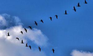 Перелетных птиц заметили в январе - фото