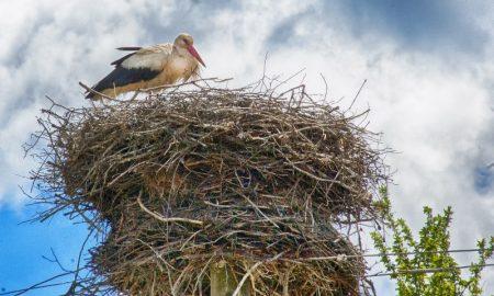 Гнездо аиста - фото