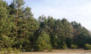 «Неделя леса» - фото