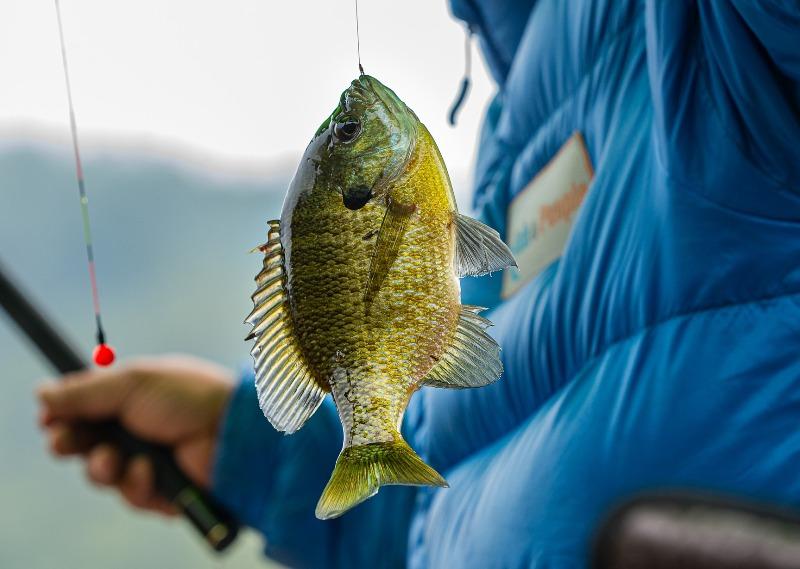 Рыба - фото