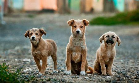 Собаки - фото