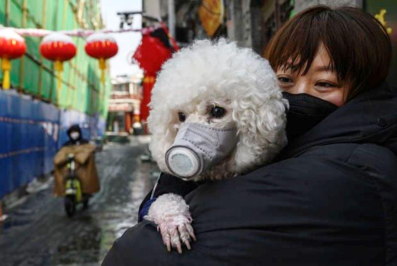 У собаки обнаружили коронавирус - фото