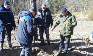 Сотрудники Пинских теплосетей приняли участие в акции «Неделя леса» - фото