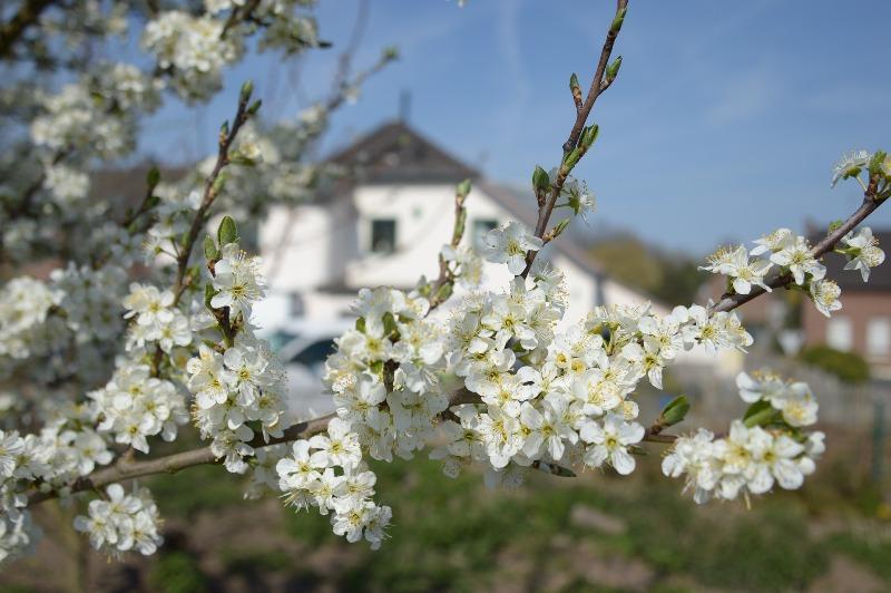 Деревья цветут - фото