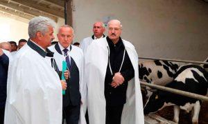 Лукашенко рассказал, где искать спасение от коронавируса - фото