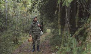 Правила безопасности в лесу - фото
