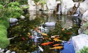 пруд для рыбы - фото