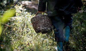 спасли четверых заблудившихся в лесу, нашли троих - фото
