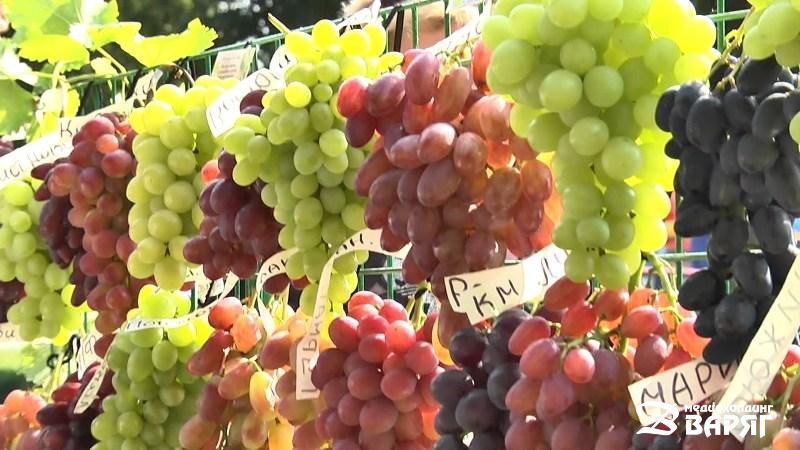 Виноград - фото