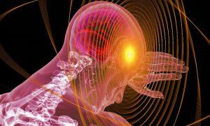 Мозг - фото