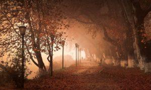 Туман - фото