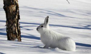 Охота на зайца - фото
