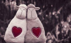 Овцы - фото
