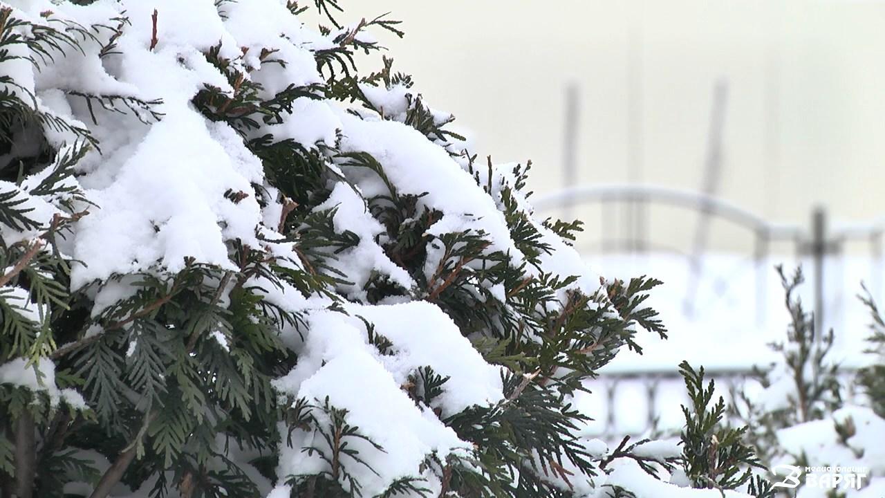 Снег в Пинске - фото
