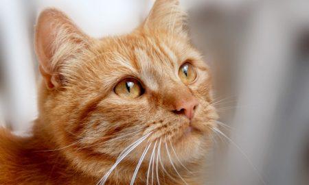 Кот - фото