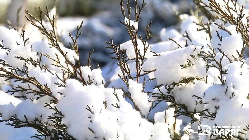 Снег - фото