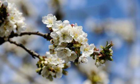 Цветы - фото