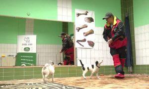 Школа собак - фото