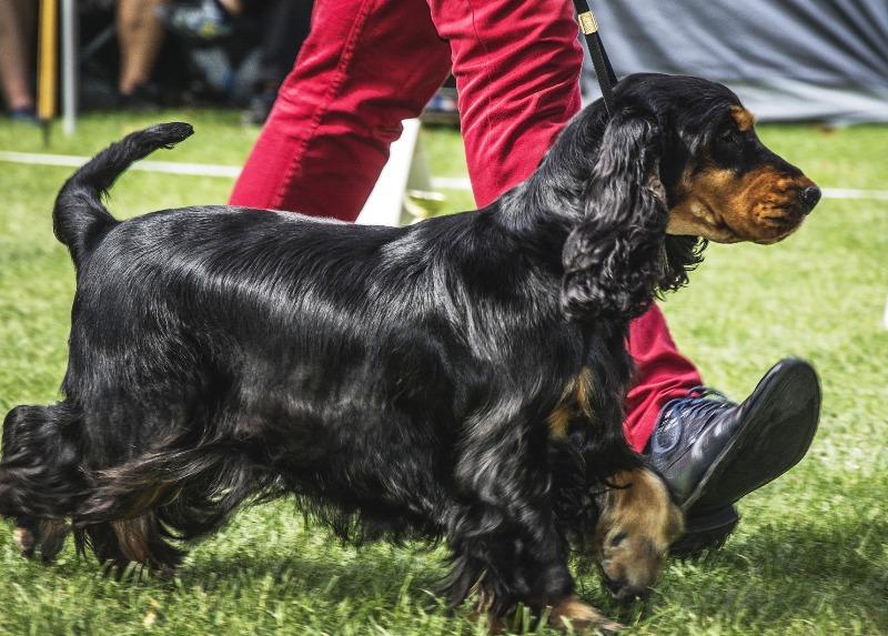 Выставка собак - фото