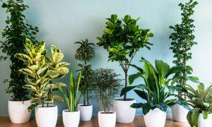 Комнатные растения, фото