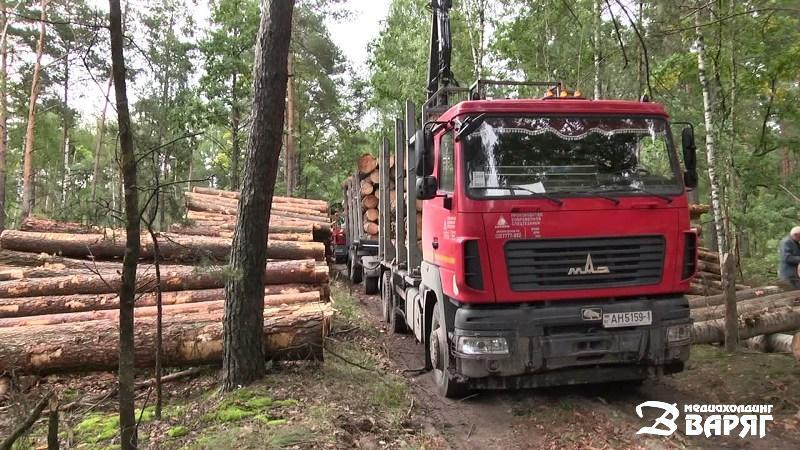 Пинский лесхоз - фото