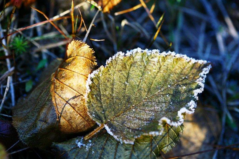 Заморозки - фото