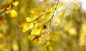 Осенний лист - фото