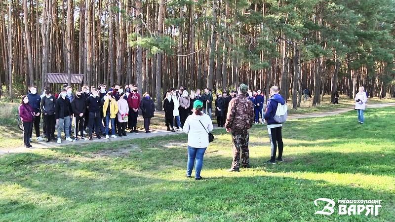 Уборка леса - фото