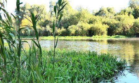 Река - фото